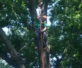 Tree Climbing Championship Competition at the Brooklyn Botanic Garden