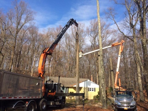 Armonk NY Tree Removal