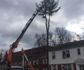 Mt. Kisco Tree Removal