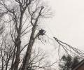 Pound Ridge Tree Removal