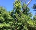 Kent NY Tree Removal