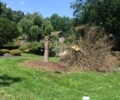 Emergency Tree Service Available