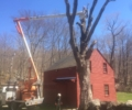 Putnam Valley Tree Stump Removal
