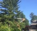 Connecticut Tree Services