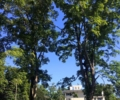 Greenwich, CT Tree Service