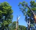 Connecticut Tree Service