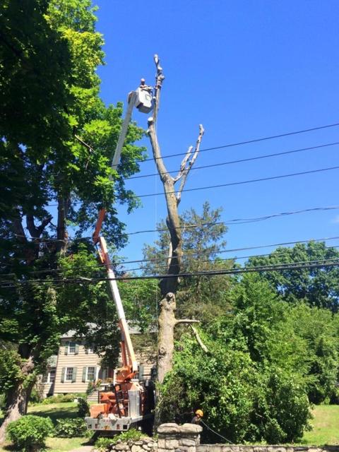 Happy Monday from Greenpoint Tree Service