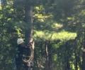 Mahopac NY Premium Tree Services