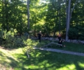 Hickory Tree Removal