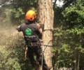 Tree Service Specialists