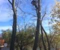 Mahopac NY Tree Removal