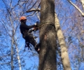 Danbury CT Tree Removal