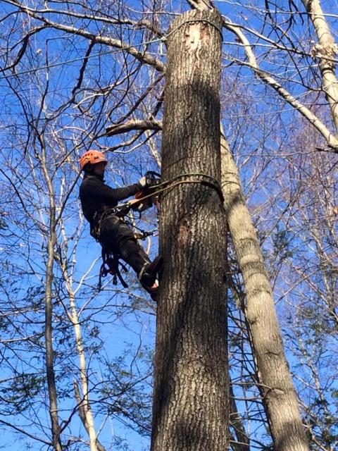 Danbury CT Tree Removal