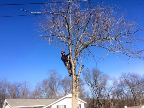 Tree Removal North Salem NY