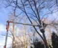 Mahopac NY Tree Trimming