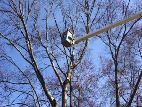 Yorktown NY Tree Trimming