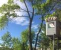 New York's Premier Tree Service