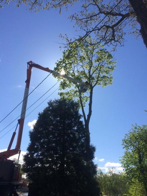 Premium Tree Trimming Services