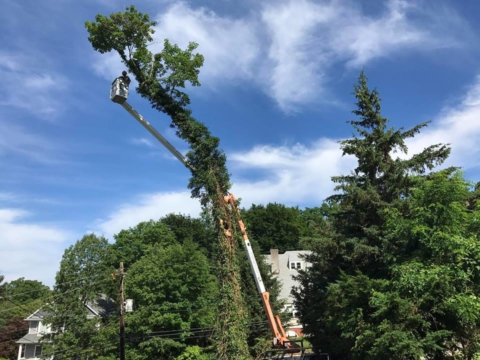 The Best in Tree Care