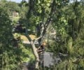 Simply the Best in Tree Services